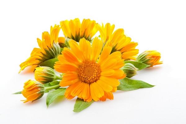 Nagietek to kwiat dla Ciebie!